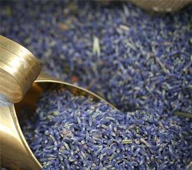 Lavender Buds (Lavandula angustifolia)