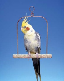 TRIMMER+PLUS CEMENT SWING - WIRE FRAME 7 INCH SWING FOR COCKATIELS