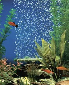 AIR DIFFUSERS - BUBBLE WALL AIR DIFFUSER 14 INCH / FITS ACROSS 5 GALLON TANK