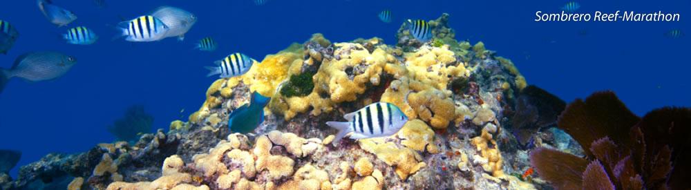 Sombrero Reef-Marathon